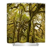 Moss-covered Maple Grove Shower Curtain