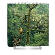 Moss Covered Tree Central California Shower Curtain