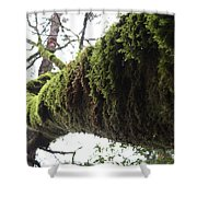 Moss Covered Tree Shower Curtain