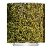 Moss Covered Tree Olympic National Park Shower Curtain