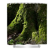 Moss Covered Tree Trunk Shower Curtain by Christina Rollo