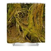 Moss-covered Tree Trunks  Shower Curtain