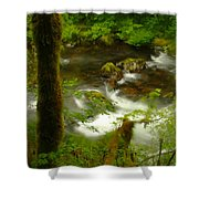 Moss Covered Trees Foregound Eagle Creek Shower Curtain