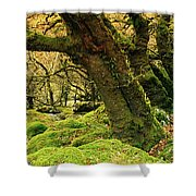 Moss Covered Trees In A Forest Shower Curtain
