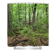 Moss Covered Trees In Forest, Lord Shower Curtain