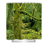 Moss Draped Big Leaf Maple California Shower Curtain
