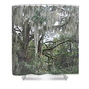 Moss Draped Live Oaks Shower Curtain