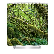 Moss Grows On Vine Maple Trees  Acer Shower Curtain