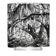 Moss In A Magical Land Shower Curtain