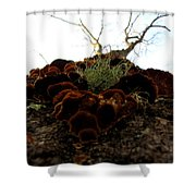 Moss In Fungus Shower Curtain