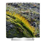 Moss In The Light Shower Curtain