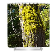 Moss On Tree Along Sentinel Dome Trail In Yosemite Np-ca Shower Curtain
