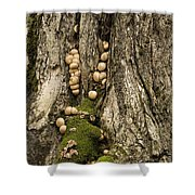 Moss-shrooms On A Tree Shower Curtain