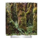 Mossy Big Leaf Maples In Hoh Rainforest Shower Curtain