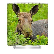 Mossy Moose Shower Curtain