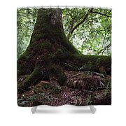 Mossy Roots Shower Curtain