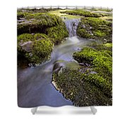 Mossy Stream Shower Curtain
