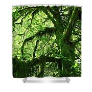 Mossy Tree Shower Curtain by Athena Mckinzie