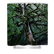 Mossy Tree Shower Curtain