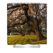 Mossy Trees At Sunset Shower Curtain