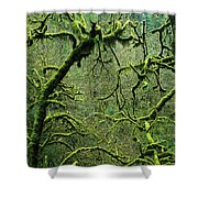 Mossy Trees Leafless In The Winter Shower Curtain