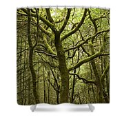 Mossy Welsh Forest  Shower Curtain