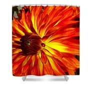 Mostly Orange Dahlia Flower Shower Curtain