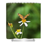Moth On Weed Shower Curtain