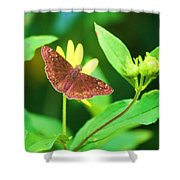 Moth On Yellow Shower Curtain