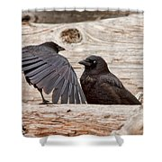 Mother And Baby Crow At The Beach Shower Curtain