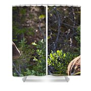 Mother And Baby Moose Shower Curtain