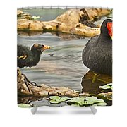 Mother And Chick Shower Curtain