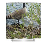 Mother And Child Canadian Geese Shower Curtain