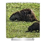 Mother And Child - Coypu - Nutria Shower Curtain
