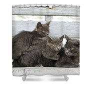 Cat And Kittens Shower Curtain