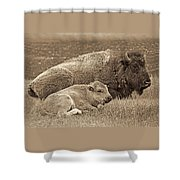 Mother Buffalo And Calf Sepia Shower Curtain
