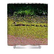 Mother Duck And Baby Ducks Shower Curtain