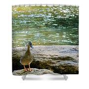 Mother Duck Shower Curtain