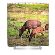 Mother Elk With Her Young Shower Curtain