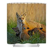 Mother Fox And Kits Shower Curtain by William Jobes