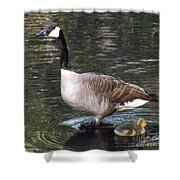 Mother Goose Is Watching Shower Curtain