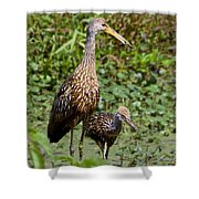 Mother Limpkin And Colt Shower Curtain