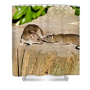 Mother Rat With Youngster Shower Curtain