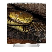 Mother Snake Shower Curtain