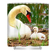 Mother Swan And Baby Shower Curtain