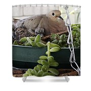 Mother With Baby Mourning Dove Shower Curtain