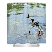 Mother Wood Duck Shower Curtain