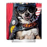 Motorcycle Chihuahua Shower Curtain