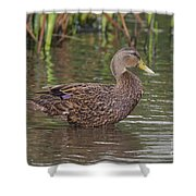 Mottled Duck Drake Shower Curtain