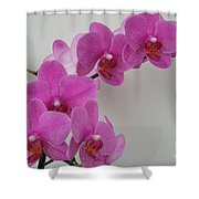 Mottled Orchid 1 Shower Curtain